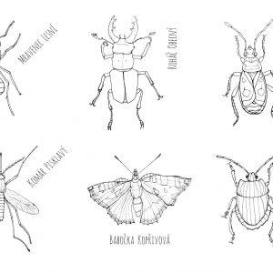 hmyzí vymalovánka