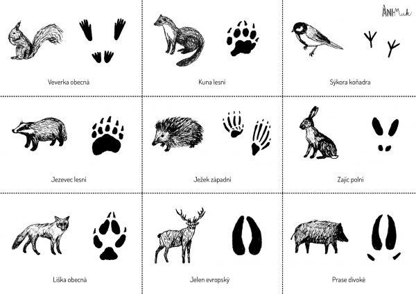 Zvířata + stopy
